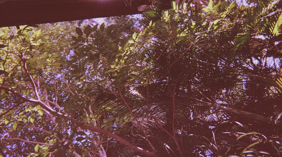 21-exposures-the-golden-filter